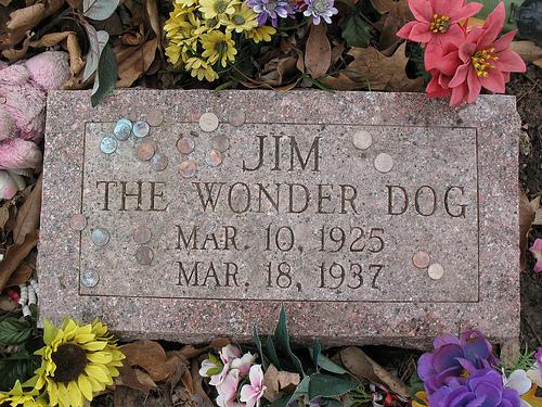 Làpida en memoria de Jim, el perro maravilla